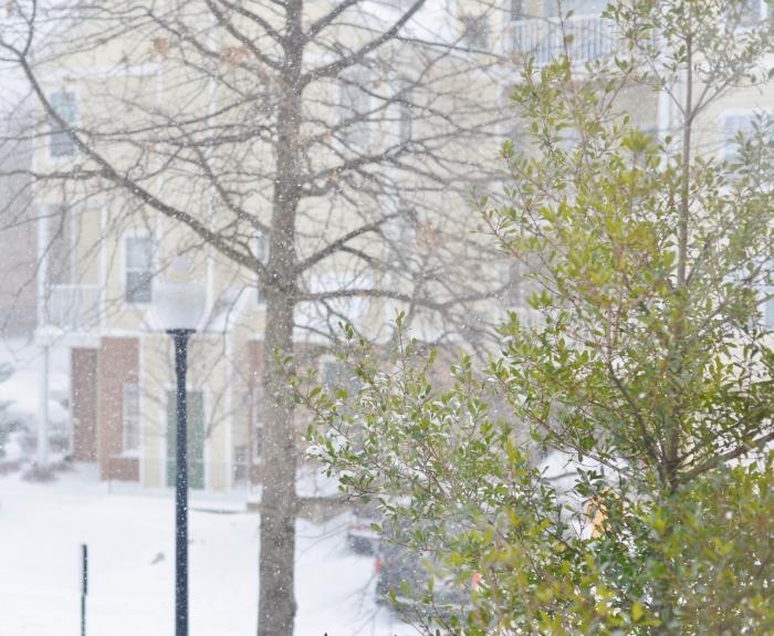 snow in nova